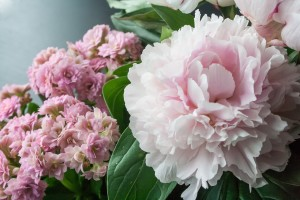 flower-825929_1280